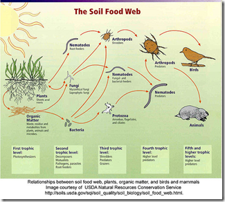 concept and description of vermiculture and vermicomposting environmental sciences essay Category archives: research papers – trials – reports vermiculture & sustainable agriculture 2009 posted on 2013/12/12 by davleyorganics american-eurasian journal of agricultural & environmental sciences special issue on  earthworms vermicompost : a powerful crop nutrient over the conventional compost & protective soil conditioner.