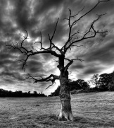 DeadTree Crop